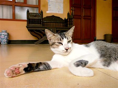 Katze_Bali_Kuta_Wakbu_Guesthouse