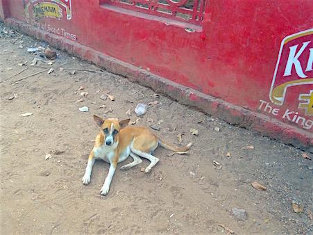 Straßenhund_Indien